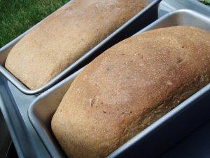 solar-oven-bread-baked