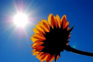 Sunshine by Sailorette857