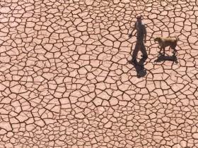 wheat-shortages-drought-spain