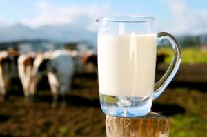 breaking-news-milk-cows-istock000003721058