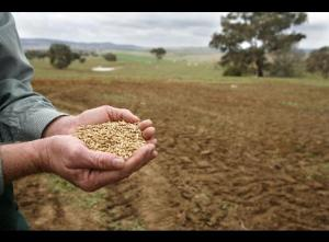 Wheat Shortages. Photo c/o bloomberg.com