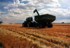 Food Shortages: Wheat. Photo c/o economicsuk.com