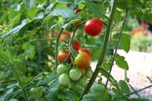 Photo c/o gardengrowth.com