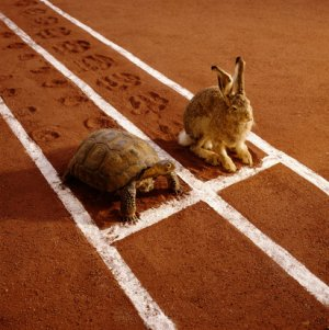 Slow and steady wins the race! Photo c/o redbrownandblue.com
