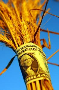 wheat-investment