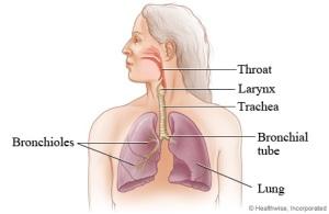 Upper Respiratory System photo c/o health.com
